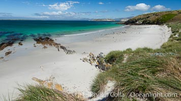Beautiful white sand beach, on the southern tip of Carcass Island, with gentoo and Magellanic penguins coming and going to sea. Carcass Island, Falkland Islands, United Kingdom, natural history stock photograph, photo id 24061