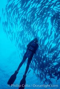 Diver and schooling jacks, Caranx sexfasciatus, Cocos Island