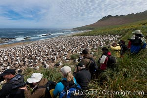 Visitors enjoy the spectacle, of the enormous breeding colony of black-browed albatrosses at Steeple Jason Island, Thalassarche melanophrys