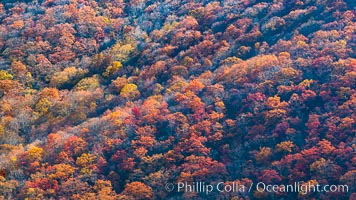 Blue Ridge Parkway Fall Colors, Asheville, North Carolina. Asheville, North Carolina, USA, natural history stock photograph, photo id 34636