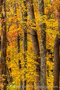 Blue Ridge Parkway Fall Colors, Asheville, North Carolina