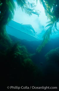 Boat Horizon anchored in kelp forest, San Clemente Island
