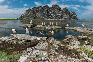 Booby Birds and Clipperton Rock, Lagoon, Clipperton Island