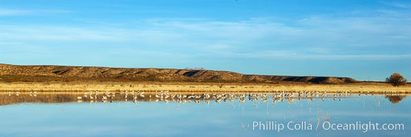 Panoramic image of one of the famous crane pools at Bosque del Apache National Wildlife Refuge, Socorro, New Mexico