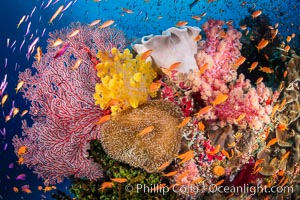 Brilliantlly colorful coral reef, with swarms of anthias fishes and soft corals, Fiji. Bligh Waters, Fiji, Dendronephthya, Pseudanthias, natural history stock photograph, photo id 34708