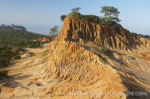 Broken Hill is an ancient, compacted sand dune that was uplifted to its present location and is now eroding, Torrey Pines State Reserve, San Diego, California