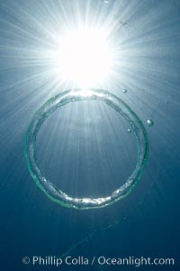 A bubble ring.  A toroidal bubble ring rises through the water on its way to the surface