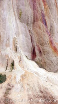 Calcium carbonate and algae detail, Orange Spring Mound, Mammoth Hot Springs, Yellowstone National Park, Wyoming
