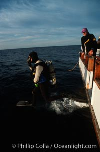 California diver, boat Horizon, San Clemente Island