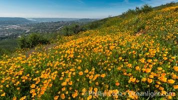 California Poppies, Rancho La Costa, Carlsbad. Rancho La Costa, Carlsbad, California, USA, Eschscholzia californica, natural history stock photograph, photo id 33163