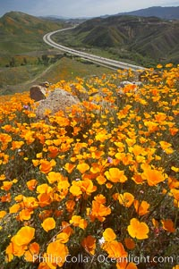 California poppies cover the hills in a brilliant springtime bloom.  Interstate 15 I-15 is seen in the distance. Elsinore, California, USA, Eschscholzia californica, Eschscholtzia californica, natural history stock photograph, photo id 20519