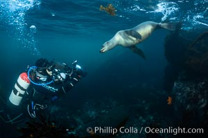 California Sea Lion and Underwater Photographer Underwater, Coronado Islands, Baja California, Mexico, Zalophus californianus, Coronado Islands (Islas Coronado)