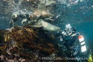 California Sea Lions and Underwater Photographer Underwater, Coronado Islands, Baja California, Mexico, Zalophus californianus, Coronado Islands (Islas Coronado)
