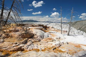 Travertine terraces below Canary Spring with dead trees permanently entombed in the hardened terraces. Mammoth Hot Springs, Yellowstone National Park, Wyoming, USA, natural history stock photograph, photo id 13618