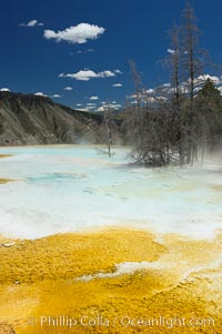 Canary Spring, Mammoth Hot Springs, Yellowstone National Park, Wyoming