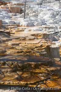 Travertine terraces below Canary Spring with dead trees permanently entombed in the hardened terraces, Mammoth Hot Springs, Yellowstone National Park, Wyoming