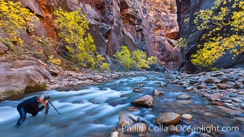 Photographer in the Virgin River Narrows, with flowing water, autumn cottonwood trees and towering red sandstone cliffs, Zion National Park, Utah