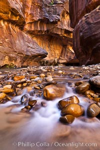 The Virgin River flows through the Zion Narrows, with tall sandstone walls towering hundreds of feet above. Virgin River Narrows, Zion National Park, Utah, USA, natural history stock photograph, photo id 26126