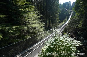 Capilano Suspension Bridge, 140 m (450 ft) long and hanging 70 m (230 ft) above the Capilano River.  The two pre-stressed steel cables supporting the bridge are each capable of supporting 45,000 kgs and together can hold about 1300 people. Vancouver, British Columbia, Canada, natural history stock photograph, photo id 21143