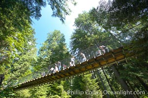 Capilano Suspension Bridge, 140 m (450 ft) long and hanging 70 m (230 ft) above the Capilano River.  The two pre-stressed steel cables supporting the bridge are each capable of supporting 45,000 kgs and together can hold about 1300 people. Vancouver, British Columbia, Canada, natural history stock photograph, photo id 21145