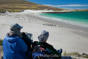Visitors watch gentoo and Magellanic penguins on beautiful Leopard Beach, coming ashore after they have foraged at sea, Carcass Island