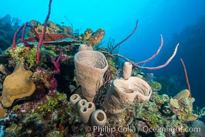 Beautiful Caribbean coral reef, sponges and hard corals, Grand Cayman Island. Grand Cayman, Cayman Islands, natural history stock photograph, photo id 32199