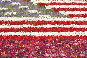 An American Flag composed of flowers at the Carlsbad Flower Fields.  The Flower Fields, 50+ acres of flowering Tecolote Ranunculus flowers, bloom each spring from March through May