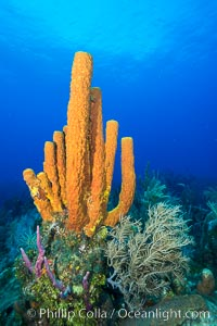 Cayman Islands Caribbean reef scene, Grand Cayman Island