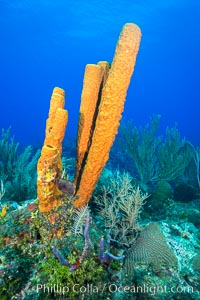 Cayman Islands Caribbean reef scene, Grand Cayman Island