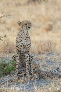 Cheetah and cub, Meru National Park, Acinonyx jubatus