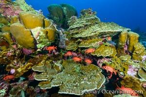 Clipperton Island coral reef, Porites sp, Porites lobata, Porites arnaudi