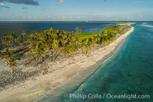 Coconut palm trees on Clipperton Island, aerial photo. Clipperton Island is a spectacular coral atoll in the eastern Pacific. By permit HC / 1485 / CAB (France). Clipperton Island, France, natural history stock photograph, photo id 32845