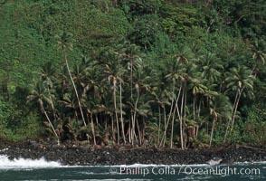 Palm trees on shoreline, Cocos Island