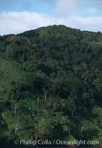Shoreline. Cocos Island, Costa Rica, natural history stock photograph, photo id 05804