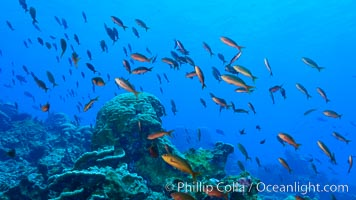 Coral Reef, Clipperton Island