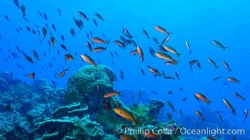 Coral Reef, Clipperton Island