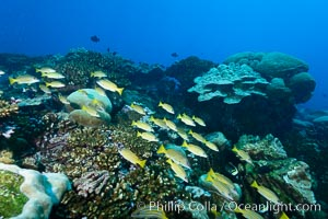 Coral Reef, Clipperton Island. Clipperton Island, France, natural history stock photograph, photo id 33043