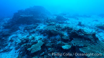 Coral reefscape in Fiji. Stony corals, such as the various species in this image, grow a calcium carbonate skeleton which they leave behind when they die. Over years, this deposit of calcium carbonate builds up the foundation of the coral reef. Fiji, Wakaya Island, Lomaiviti Archipelago