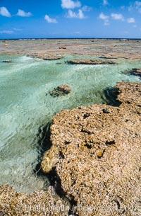 Porolithon coralline algae reef, Rose Atoll, American Samoa, Rose Atoll National Wildlife Sanctuary