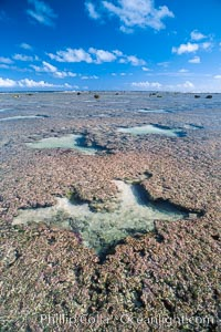 Porolithon coralline algae reef, Rose Atoll, American Samoa. Rose Atoll National Wildlife Sanctuary, USA, natural history stock photograph, photo id 00728
