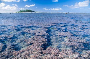 Porolithon coralline algae reef, Rose Atoll, American Samoa, Rose Atoll National Wildlife Sanctuary
