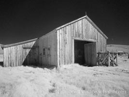 Image 23151, County barn, infrared. Bodie State Historical Park, California, USA, Phillip Colla, all rights reserved worldwide. Keywords: arrested decay, barn, bodie, bodie ghost town, bodie state historic park, bodie state historical park, bridgeport, building, california, eastern sierra, ghost town, gold mine, gold mining, gold rush, historic state park, infrared, infrared photography, mining camp, mining town, old west, outdoors, outside, sierra, state park, state parks, town, usa, village, west, wooden.