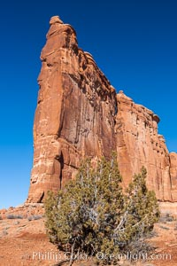 Courthouse Towers, narrow sandstone fins towering above the surrounding flatlands. Courthouse Towers, Arches National Park, Utah, USA, natural history stock photograph, photo id 18196