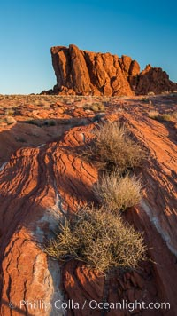 Sunrise lights sandstone rocks, Valley of Fire. Valley of Fire State Park, Nevada, USA, natural history stock photograph, photo id 28445