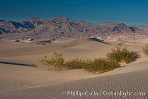 Sand Dunes, California.  Near Stovepipe Wells lies a region of sand dunes, some of them hundreds of feet tall. Death Valley National Park, USA, natural history stock photograph, photo id 15603