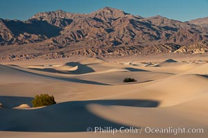 Sand Dunes and the Grapevine Mountains, California.  Near Stovepipe Wells lies a region of sand dunes, some of them hundreds of feet tall. Stovepipe Wells, Death Valley National Park, California, USA, natural history stock photograph, photo id 15641