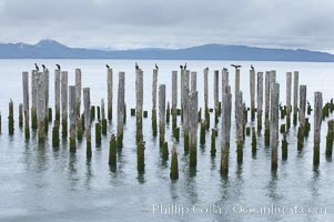 Derelict pilings, remnants of long abandoned piers. Columbia River, Astoria, Oregon, USA, natural history stock photograph, photo id 19388