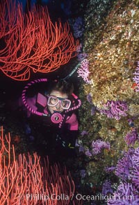 Diver, reef and gorgonians, San Clemente Island