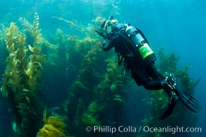 Diver and Kelp Forest, Catalina Island
