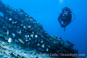Diver and Schooling Fish, Galapagos Islands